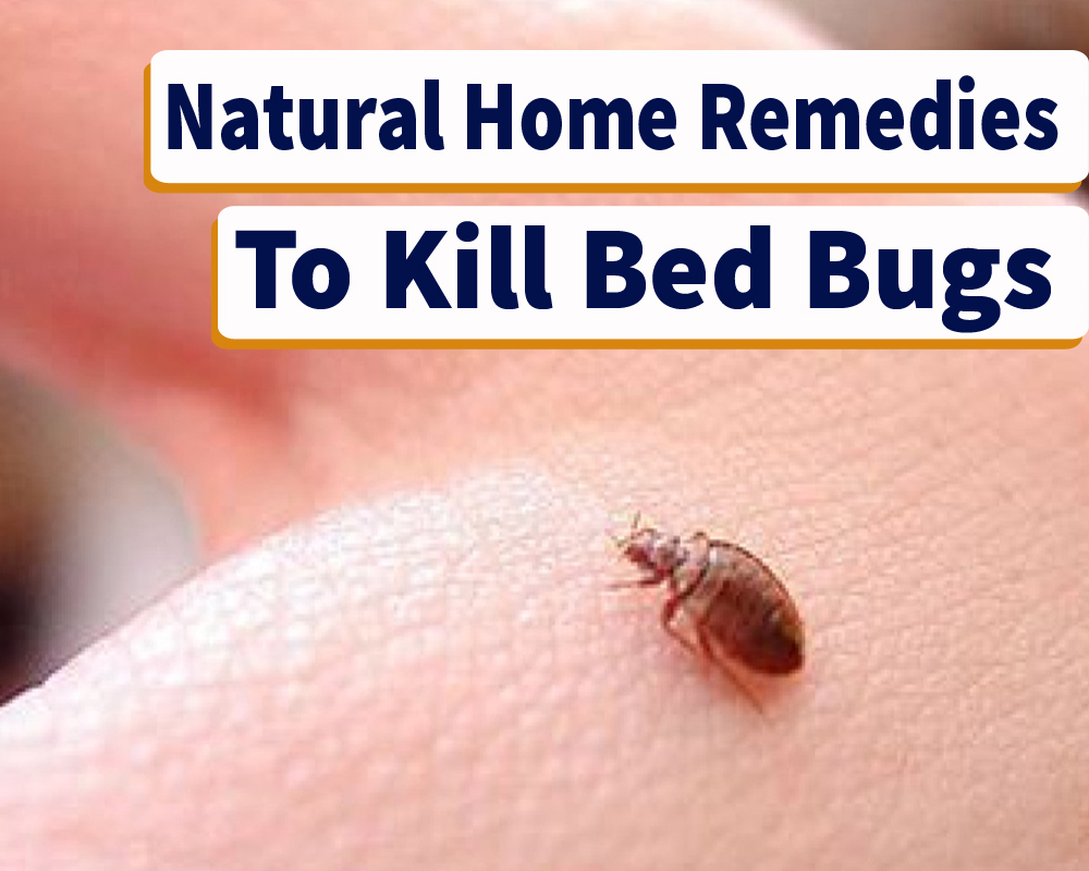 Home Remedies For Bed Bugs Killing That Actually Work Sleepy Home